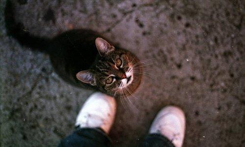 Welkom op de blog van Designed for cats