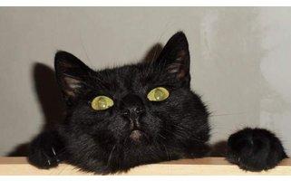 Adopteer eens een (oudere) kat