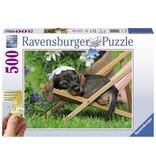 Ravensburger Puzzels Ravensburger Puzzel Schattige Teckel 500 stukjes