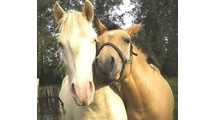 Sweet Horses
