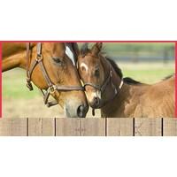 Paarden & paardenstallen