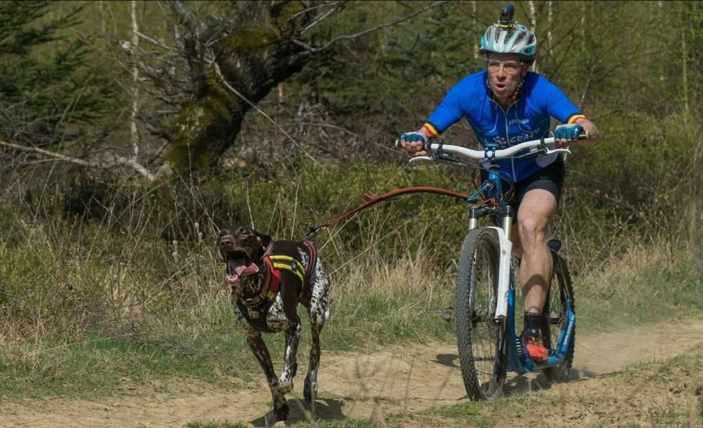 Steppen voor de hondensport