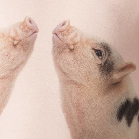 SNURK Kids T-shirt Dress Piggies met print van schattige micro varkentjes