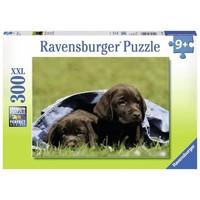 Puzzel XXL Labrador pups: 300 stukjes