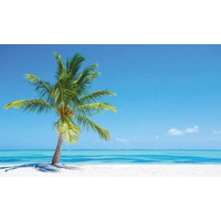 Stickerbehang RoomMates palm tree 91x152 cm