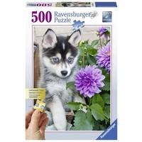 Puzzel Husky 500 stukjes