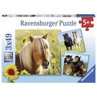 Puzzel Schattige Pony`s 3x49 stukjes