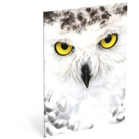Schrift Wood owl A4 gelijnd