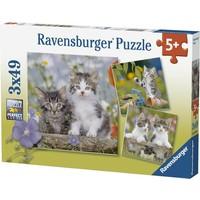Puzzel Chatons tigres: 3x49 stukjes