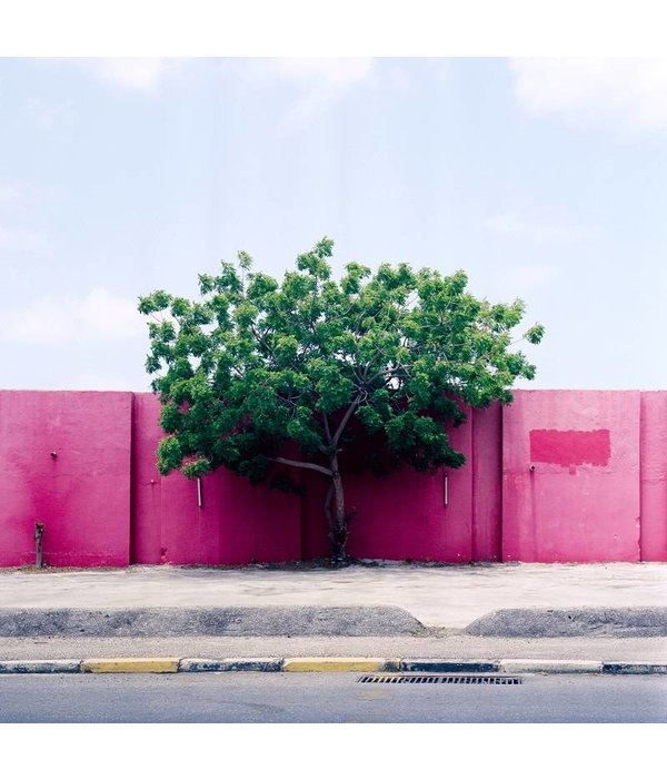 Kaspar Bossers Tree on Pink