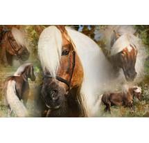Paard en ruitersport