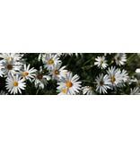 Fleurs toile de jardin