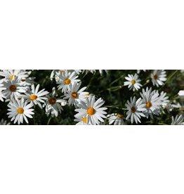 Flowers Garden Canvas