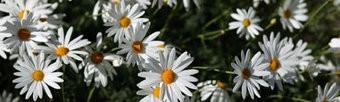 Blumen Textilposter Garten