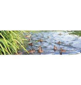 Ducks Garden Canvas