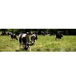 Kühe Textilposter Garten