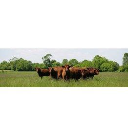 Bulls garden canvas