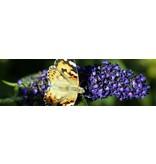Vlinder Tuindoek