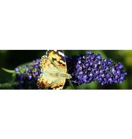 Schmetterling Textilposter Garten