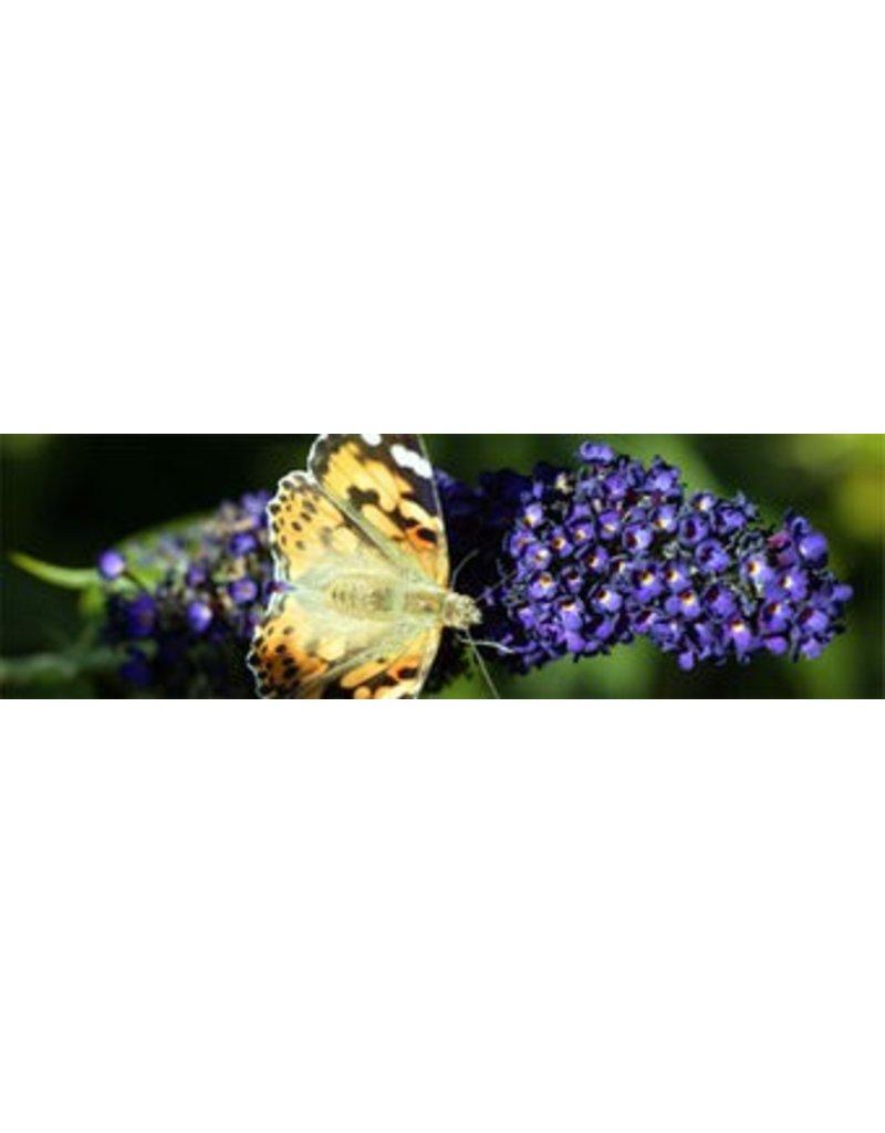 Papillon toile de jardin