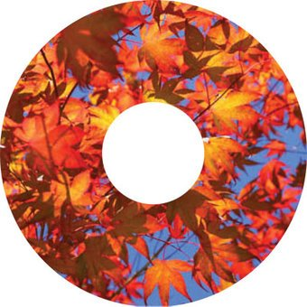 spoke protector sticker Leaves