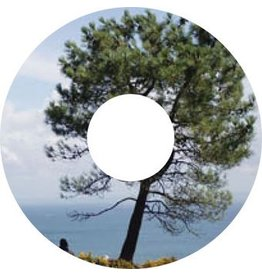 Autocollant protège-rayon arbre autocollant