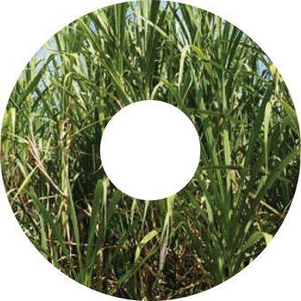 Spaakbeschermer sticker Gras Plant