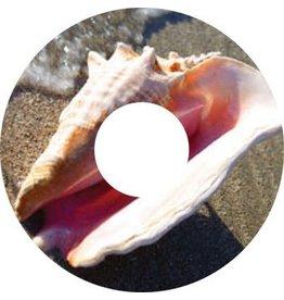 Speichenschutz Sticker Muschel