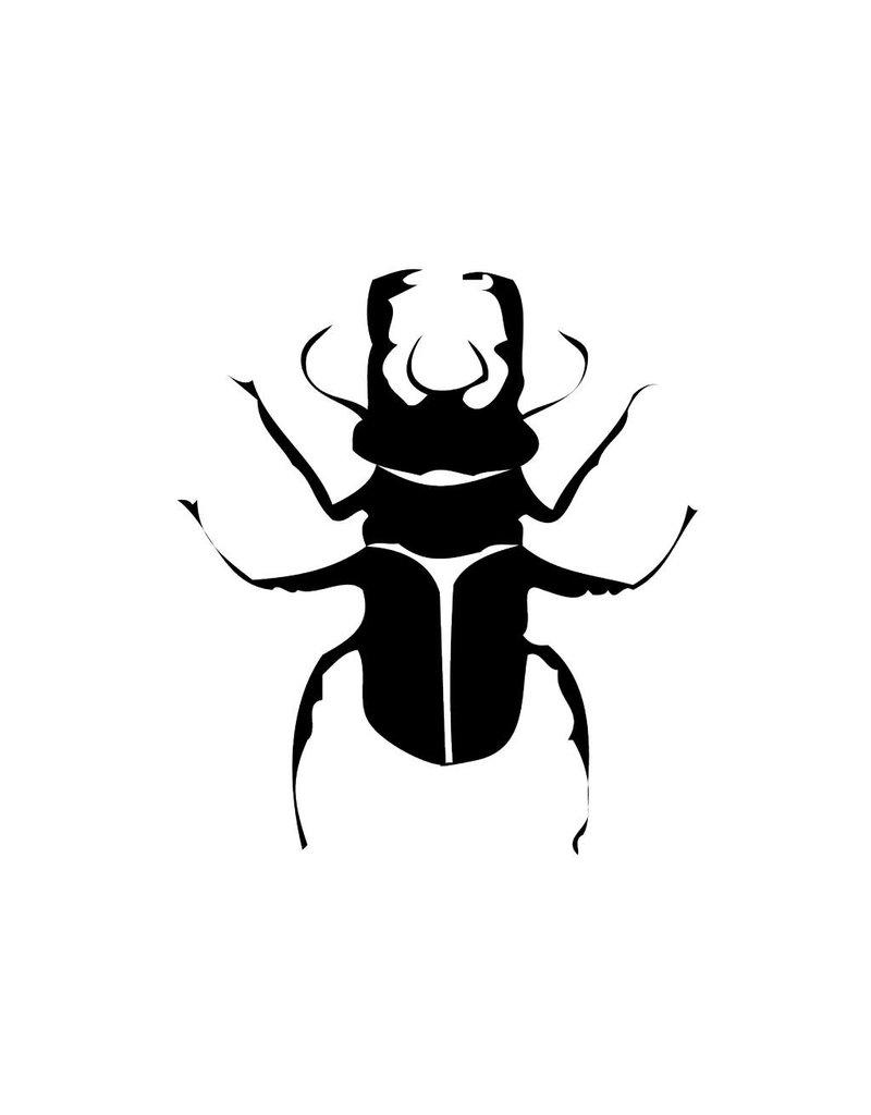 Escarabajo 1
