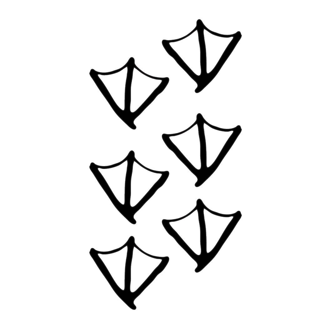 Pieds de canard