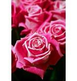 Autocollant de porte de roses