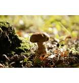 Autocollant de porte de champignons