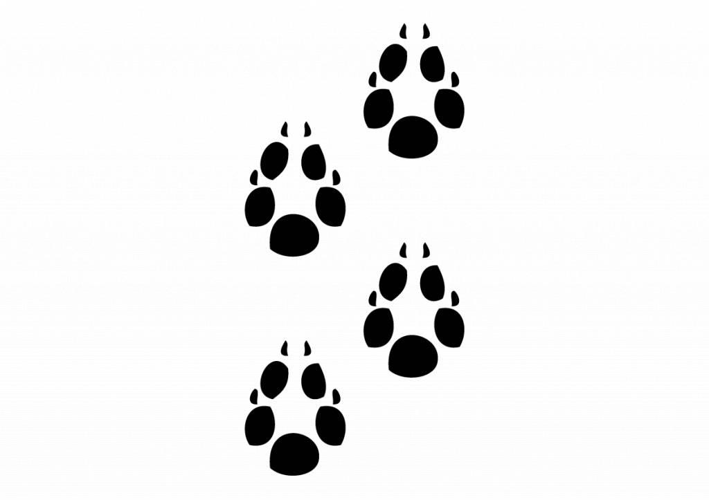 Pattes des animaux renard