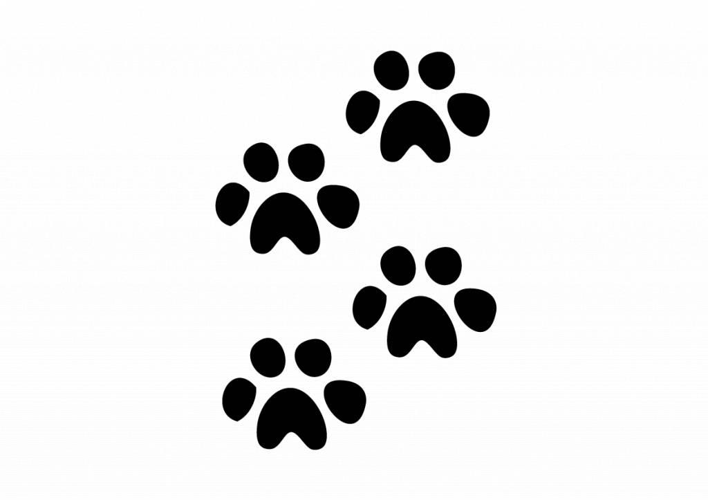 Patas de animales cachorro