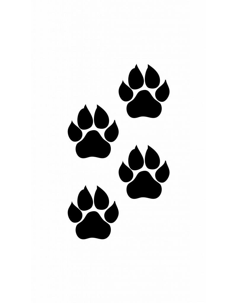 Pattes des animaux chat