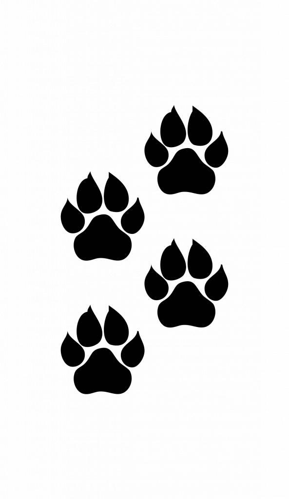 Patas de animales gato