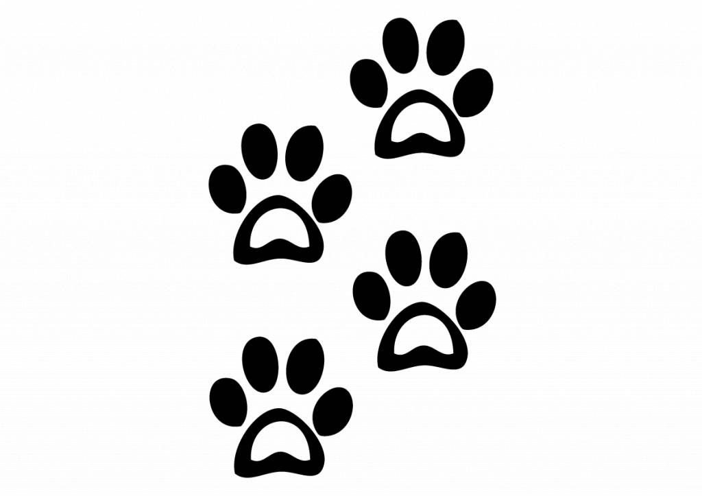 Tierfüße Hund 2