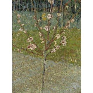 Peach  Tree in Blossom