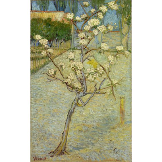 Small Pear Tree in Blossom