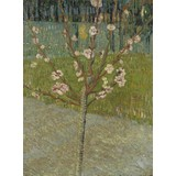 Peach Tree in Blossom - Card / A4 reproduction