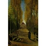 Avenue of Poplars in Autumn - Multimedia / Film / Video