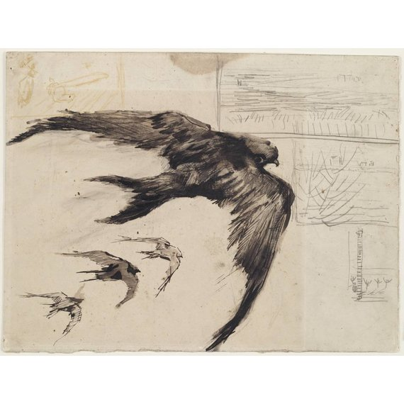 Four Swifts with Landscape Sketches
