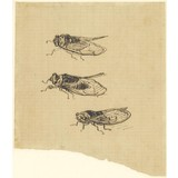 Three Cicadas