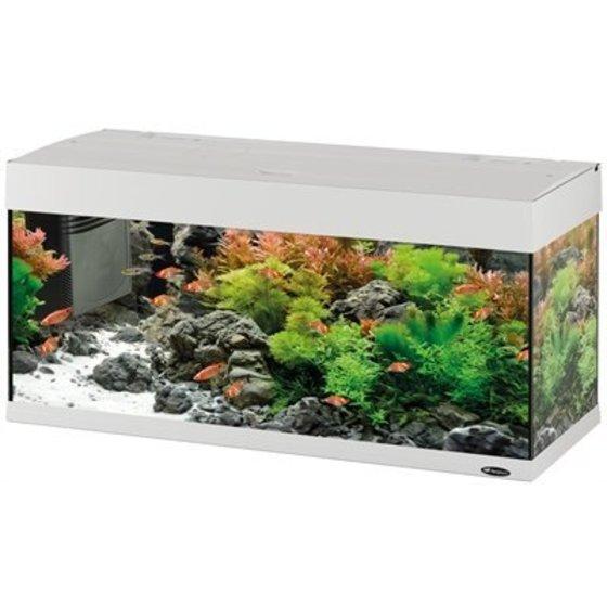 Aquarium en Decoratie