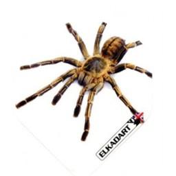 Elkadart Elkadart strong Death Spider