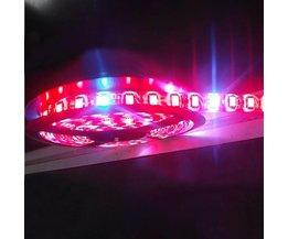 LED Strip Verlichting voor Planten