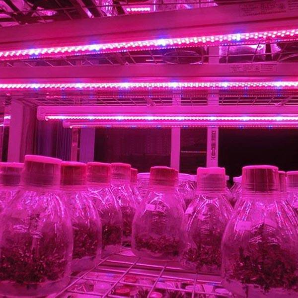 https://static.webshopapp.com/shops/069283/files/036916502/led-strip-verlichting-voor-planten.jpg