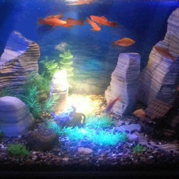 LED Verlichting Aquarium online bestellen? I MyXLshop (Tip)