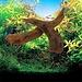 Drijfhout voor in het Aquarium