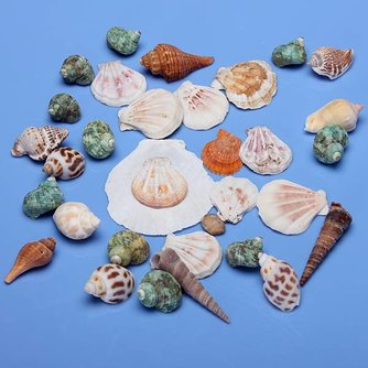 Netje met Aquarium Schelpen